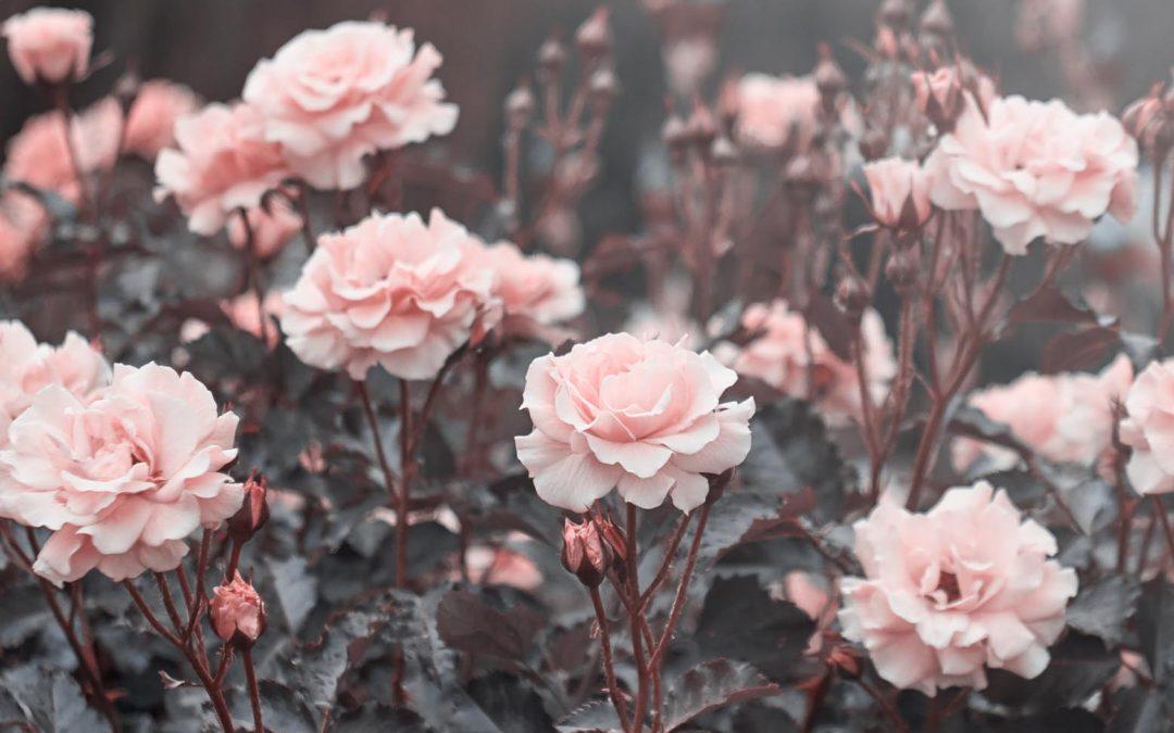 The art of appreciation – 7 minute read